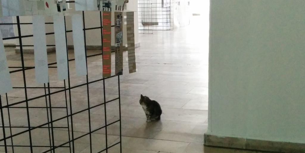 Taskisla kitty